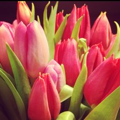 Tulips -- my favorite flower!