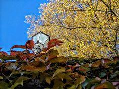 A lamppost, immersed in a sea of leaves... . . #lamppost #Autumn #autumnleaves #orange #red #yellow #autumnalcolors #trees #LakeConstance #LagoDeConstanza #Bodensee #BadenWürttemberg #RadolfzellAmBodensee #Germany #Alemania #Deutschland #kodakpixpro #kodak_photo #AZ362