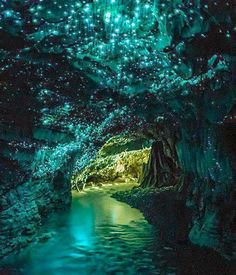 Waitomo Glow Caves, New Zealand