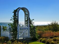 Wondering which rose blooms on this Nantucket arbor.