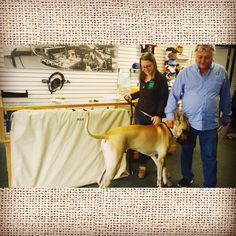 This is Max... He was happy to pick up his custom embroidered dog carrier and cover for his dog shows he competes in. Max even got to meet Skazma owner, Kevin. Thanks for the visit Max it was our pleasure #skazma #embroidery #dogsofinsta #maxyheshowdog #greatdane #newcustomer #localsupportinglocal #colorado #longmont #showdog #personalizedembroidery #like #comment #follow