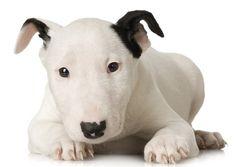 Advertencias al comprar cachorros