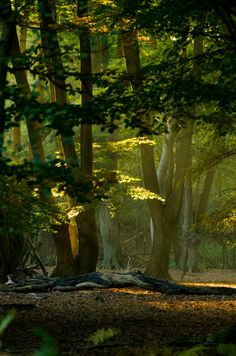 Sunset, Epping Forest, England