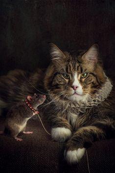 cat & a rat in a spanish ruff Canvas Art, Canvas Prints, Art Prints, Art Viewer, Thing 1, Original Art For Sale, Conceptual Art, Beautiful Cats, Vintage Photographs