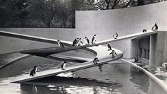 Modernist penguins. Penguin pool at London zoo by Berthold Lubetkin. Constructed in 1934.