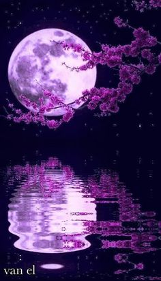 Beautiful moon with flowers Purple Wallpaper, Cute Wallpaper Backgrounds, Pretty Wallpapers, Galaxy Wallpaper, Flower Wallpaper, Beautiful Nature Wallpaper, Beautiful Moon, Beautiful Landscapes, Moon Pictures