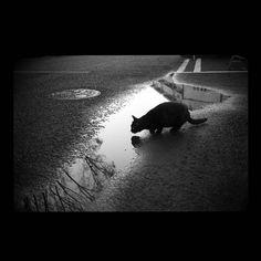 https://flic.kr/p/BnzKPH   Kuro November 2014 #cat #photograph #blackandwhitephotography