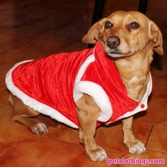 Dog XMas Coats