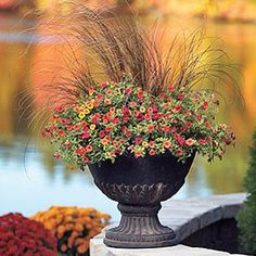 Fall Container Designs for Sun or Shade | P. Allen Smith Garden Home