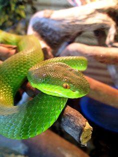 Lawnwood Snake Park Plettenberbay