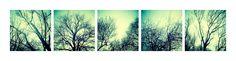 // As árvores unidas jamais serão vencidas  [The trees united will never be defeated]  // Composition (19 January 2012) // Lisbon, Portugal // 17 January 2012  // 50x50cm x5 // Inkjet print (Epson UltraChrome K3 pigmented ink on Hahnemuhle Photo Rag paper) // Edition of 3 + 1AP    // José De Almeida photography  // http://www.josedealmeida.com/