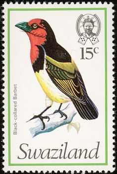 Black-collared Barbet stamps - mainly images - gallery format