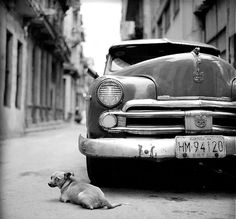 A stop while doing business in Cuba. I am a dog lover, I thought it would be a great shot. Noel Pelavin @Smithsonian Magazine