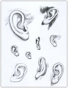 Drawing Tips Ear Drawing Reference Guide Anatomy Sketches, Anatomy Drawing, Anatomy Art, 3d Drawing Techniques, Drawing Tips, Drawing Reference, Drawing Drawing, Anatomy Reference, Pencil Art Drawings