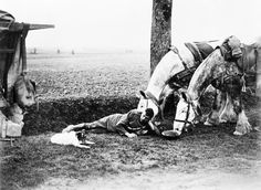 A British Army driver lying at the roadside near Arras with his two horses and dog during the retreat from the German offensive, 17 April 1917.  Beautiful drafters--I wonder if they survived the war....