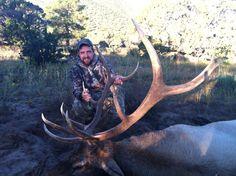 2013 bull.