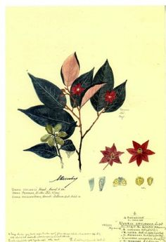 Descubes Botanical Art at Lewis Ginter Botanical Garden:  This collection of 2500 original watercolor botanical drawings by the artist Alexandre Descubes depicts plants from the Indian sub-continent. We are so lucky to have it!