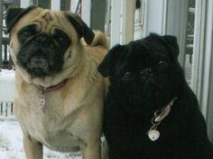 My baby girls, Sami and Leela