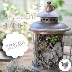 DIY Succulent Planter Lantern! Sounds like a plan since my boys shot out the glass panes with air-soft guns!!!