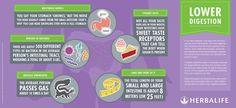 Herbalife: lower digestion