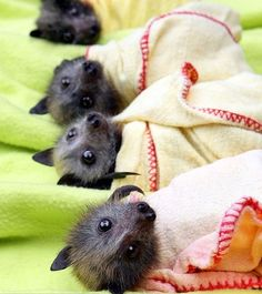 Baby Bats in Blankets by girlwerewolf.