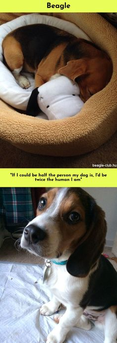 T-Shirt animal dog puppy pet paw fur cute hipster 4694 Schnauzer Illustration