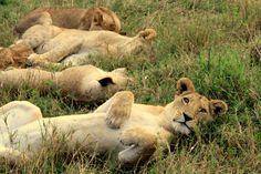 Mahali Mzuri, Kenya - Safari