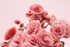 Pink flowers photograph by Ana Pontes.