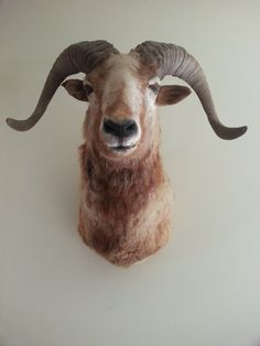 Your place to buy and sell all things handmade Shabby Chic Cottage, Shabby Chic Homes, Animal Decor, Taxidermy, Vintage Home Decor, Antlers, Wool Felt, Vintage Shops, Sheep