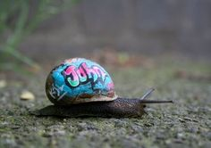 this snail passed out in the wrong neighborhood