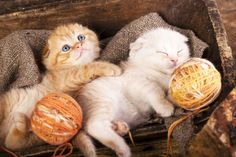 Kittens Sleeping with a Ball of Wool puzzle in Puzzle of the Day jigsaw puzzles on TheJigsawPuzzles.com. Play full screen, enjoy Puzzle of the Day and thousands more.