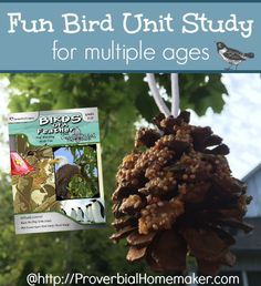 Fun Bird Unit Study for Multiple Ages - reading lists, bird feeders, identification, ornithology, owl pellets and more!