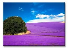 Lavender farm just outside of Fredericksburg, Texas How beautiful! Texas Roadtrip, Texas Travel, Oh The Places You'll Go, Places To Travel, Places To Visit, Champs, Fredericksburg Texas, Texas Hill Country, Texas Farm