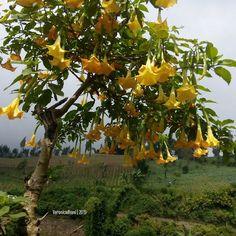 Veronica, Instagram Posts, Flowers, Plants, Plant, Royal Icing Flowers, Flower, Florals, Floral