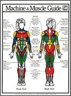 beginners strength training workout for a woman 502 – Fitness And Exercises Strength Training For Beginners, Strength Training For Runners, Strength Training Workouts, Weight Training, Training Tips, Muscle Training, Weight Loss Inspiration, Fitness Inspiration, Weight Lifting Machines