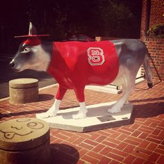Nc state wolf cow!!