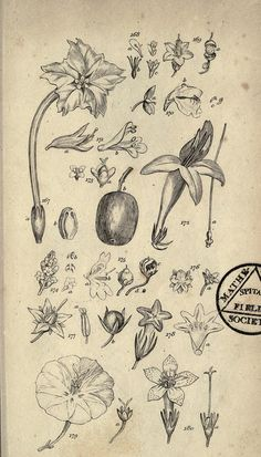 Botanical  from BioDivLibrary, via Flickr