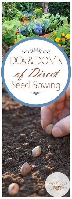 Dos and Donts of Direct Seed Sowing ~ Bees and Roses - Garden tips and tricks - Dos and Donts of Direct Seed Sowing - Growing Seeds, Growing Plants, Gardening For Beginners, Gardening Tips, Vegetable Gardening, Back Gardens, Outdoor Gardens, Starting Seeds Indoors