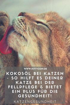 Kokosöl für Katzen – so hilft es deiner Samtpfote Coconut oil for cats is becoming more popular! Coconut Oil For Cats, Coconut Oil Diet, Canaan Dog, Cat Nutrition, Cat Room, Cat Pin, Cat Facts, Cat Grooming, Cat Health