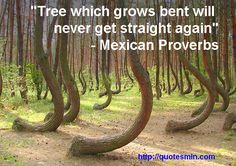 """Tree which grows bent will never get straight again"" - Mexican Proverb. For more Mexican Proverbs http://quotesmin.com/Mexican-proverb.php"