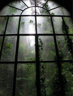 I am resting in a abandoned mansion. I see the moonlit mist in the forest. I hear the sound of wolves howling. I fall asleep watching the misty forest through a large window. Dark Green Aesthetic, Nature Aesthetic, Aesthetic Pastel, Bohemian House, Dark Bohemian, Images Esthétiques, Slytherin Aesthetic, Home Photo, Abandoned Places