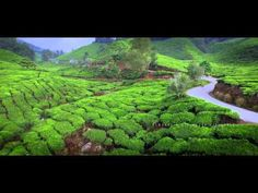 ALWAYS | Cameron Highlands with Inspire 1