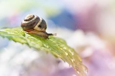 Dreamy snail by Screeny's Photo Bucket on Creative Market