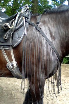 Horse Gear, Horse Tack, Horse Exercises, All About Horses, Horse Training, Saddles, Equestrian, Horse Stuff, Ponies