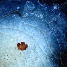 Ice, leaf, blue