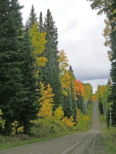 Early Fall Color Display In Colorado