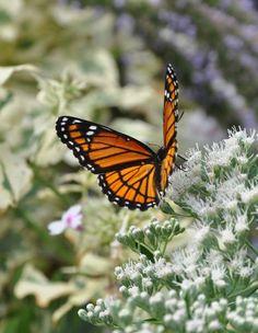 how to create a butterfly garden, gardening, how to Butterfly Garden Plants, Glass Butterfly, Monarch Butterfly, Garden Crafts, Garden Art, Rose Garden Design, Flying Flowers, Garden Trellis, Garden Inspiration
