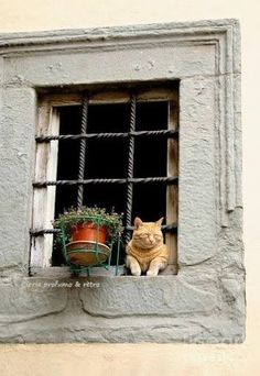 Pretty Cat  In Window !!
