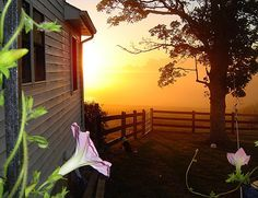 Early morning on the farm... notice the flowers in bloom.