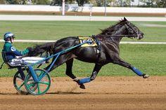 harness racing | Harness horse racing
